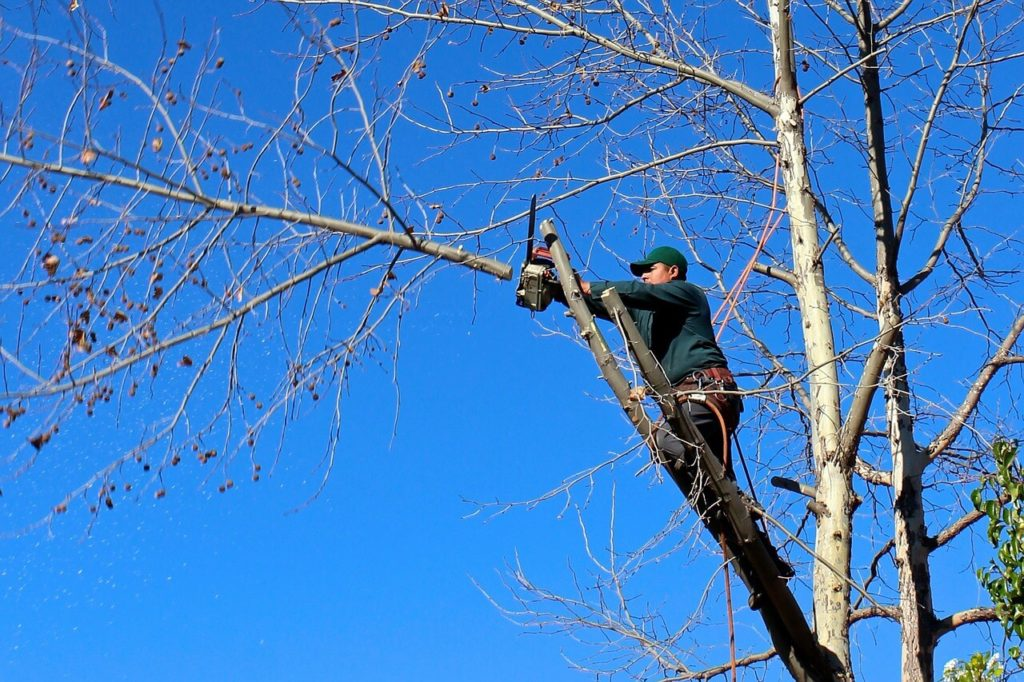 Contact Us-Town 'n' Country FL Tree Trimming and Stump Grinding Services-We Offer Tree Trimming Services, Tree Removal, Tree Pruning, Tree Cutting, Residential and Commercial Tree Trimming Services, Storm Damage, Emergency Tree Removal, Land Clearing, Tree Companies, Tree Care Service, Stump Grinding, and we're the Best Tree Trimming Company Near You Guaranteed!