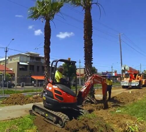 Palm Tree Removal-Town 'n' Country FL Tree Trimming and Stump Grinding Services-We Offer Tree Trimming Services, Tree Removal, Tree Pruning, Tree Cutting, Residential and Commercial Tree Trimming Services, Storm Damage, Emergency Tree Removal, Land Clearing, Tree Companies, Tree Care Service, Stump Grinding, and we're the Best Tree Trimming Company Near You Guaranteed!