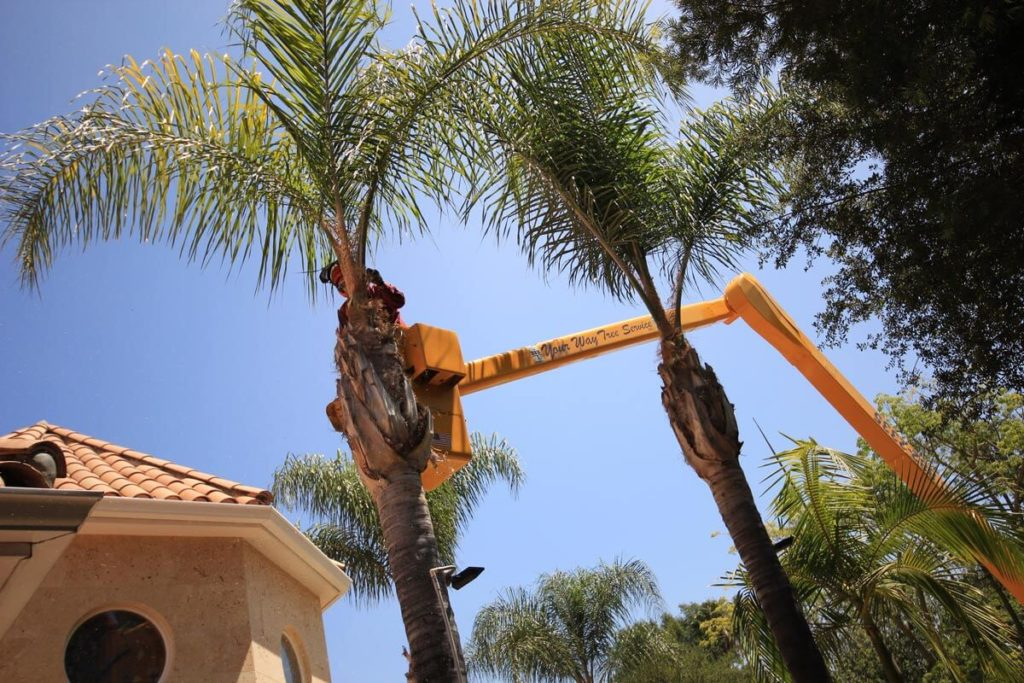 Palm Tree Trimming-Town 'n' Country FL Tree Trimming and Stump Grinding Services-We Offer Tree Trimming Services, Tree Removal, Tree Pruning, Tree Cutting, Residential and Commercial Tree Trimming Services, Storm Damage, Emergency Tree Removal, Land Clearing, Tree Companies, Tree Care Service, Stump Grinding, and we're the Best Tree Trimming Company Near You Guaranteed!