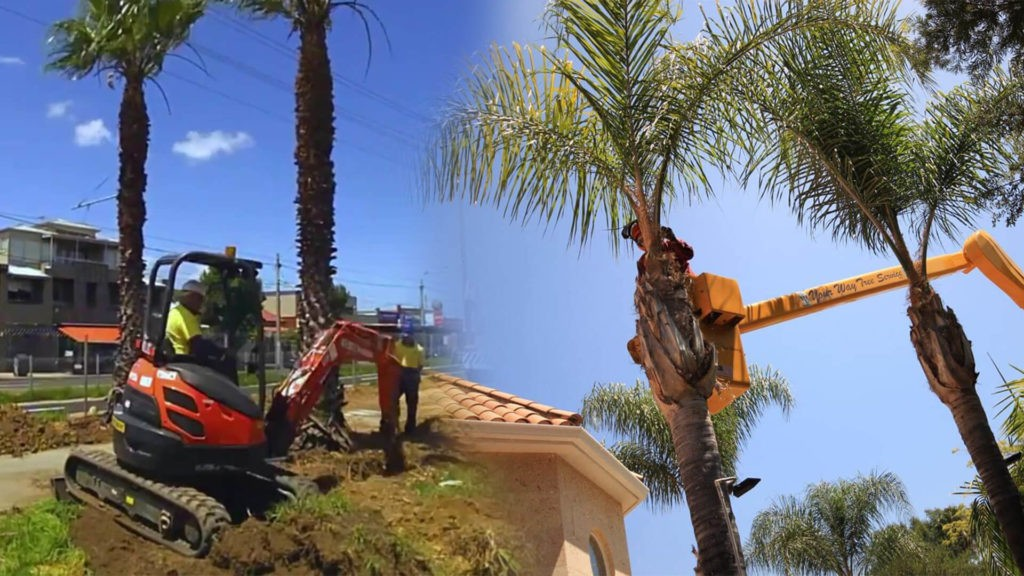 Palm tree trimming & palm tree removal-Town 'n' Country FL Tree Trimming and Stump Grinding Services-We Offer Tree Trimming Services, Tree Removal, Tree Pruning, Tree Cutting, Residential and Commercial Tree Trimming Services, Storm Damage, Emergency Tree Removal, Land Clearing, Tree Companies, Tree Care Service, Stump Grinding, and we're the Best Tree Trimming Company Near You Guaranteed!