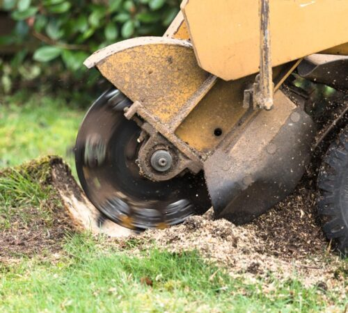Stump Grinding-Town 'n' Country FL Tree Trimming and Stump Grinding Services-We Offer Tree Trimming Services, Tree Removal, Tree Pruning, Tree Cutting, Residential and Commercial Tree Trimming Services, Storm Damage, Emergency Tree Removal, Land Clearing, Tree Companies, Tree Care Service, Stump Grinding, and we're the Best Tree Trimming Company Near You Guaranteed!