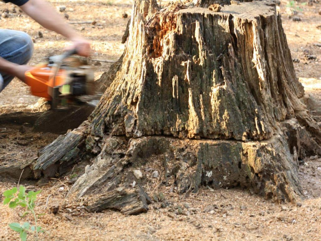Stump Removal-Town 'n' Country FL Tree Trimming and Stump Grinding Services-We Offer Tree Trimming Services, Tree Removal, Tree Pruning, Tree Cutting, Residential and Commercial Tree Trimming Services, Storm Damage, Emergency Tree Removal, Land Clearing, Tree Companies, Tree Care Service, Stump Grinding, and we're the Best Tree Trimming Company Near You Guaranteed!