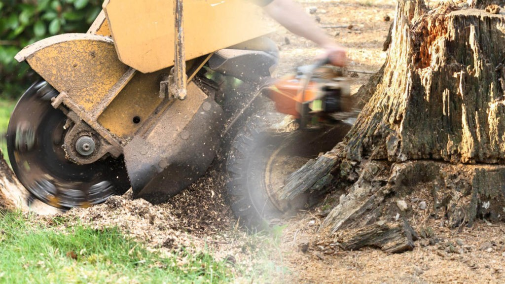 Stump grinding & removal-Town 'n' Country FL Tree Trimming and Stump Grinding Services-We Offer Tree Trimming Services, Tree Removal, Tree Pruning, Tree Cutting, Residential and Commercial Tree Trimming Services, Storm Damage, Emergency Tree Removal, Land Clearing, Tree Companies, Tree Care Service, Stump Grinding, and we're the Best Tree Trimming Company Near You Guaranteed!