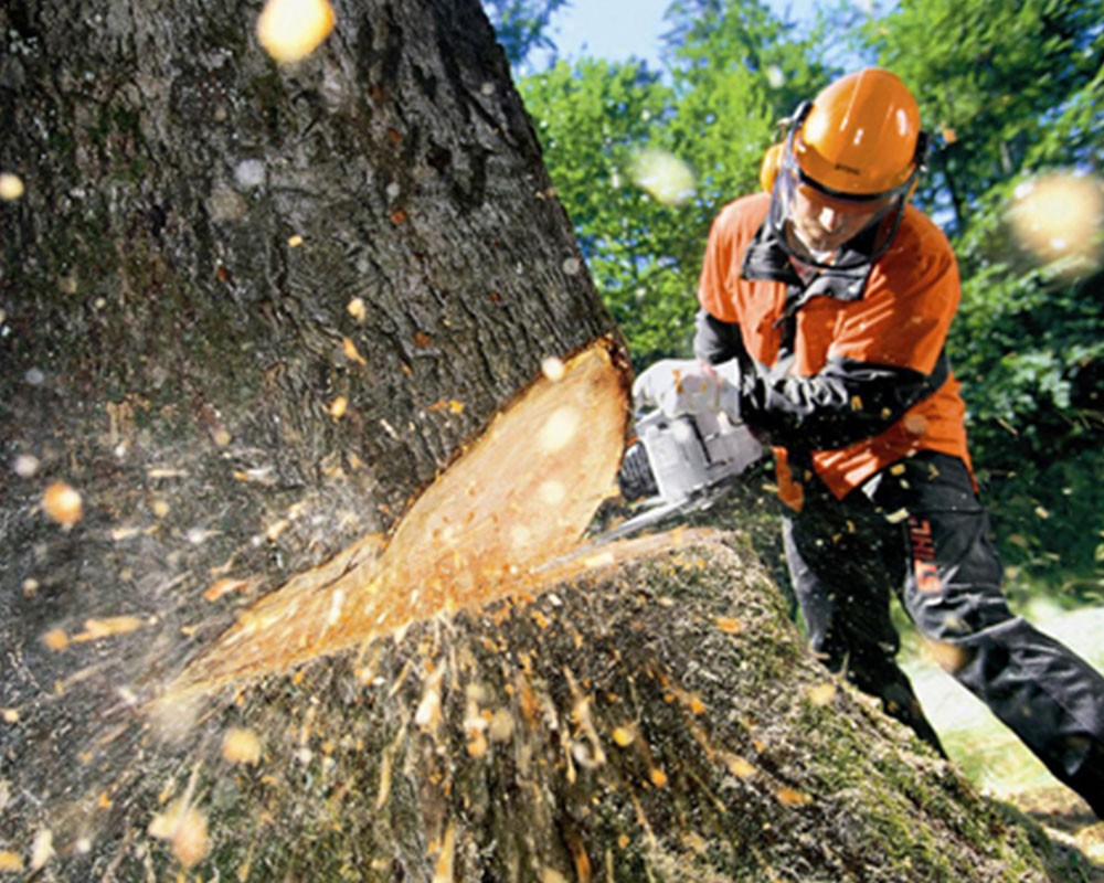 Tree Cutting-Town 'n' Country FL Tree Trimming and Stump Grinding Services-We Offer Tree Trimming Services, Tree Removal, Tree Pruning, Tree Cutting, Residential and Commercial Tree Trimming Services, Storm Damage, Emergency Tree Removal, Land Clearing, Tree Companies, Tree Care Service, Stump Grinding, and we're the Best Tree Trimming Company Near You Guaranteed!